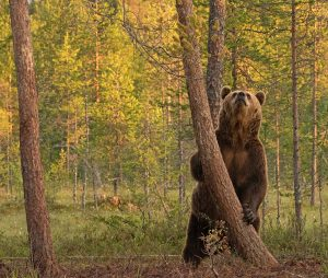 Fantastic Brown Bear Image Awarded POTW